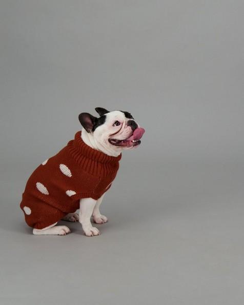 Cady Dog Jumper -  rust