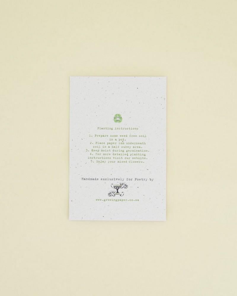 Yuzu Growing Paper Card -  assorted
